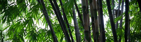 Bamboo – The Sustainable Material